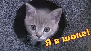 як зробити котячий будинок своїми руками