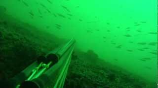 Big snaper Spearfishing in Portugal Vol.I - pesca sub grande pargo 8,2Kg dentex