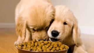 Köpeğimizi kaç öğün beslemeliyiz