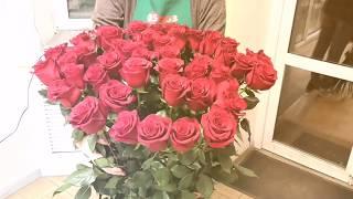 идеальный подарок девушке - огромная 51 красная роза 120см