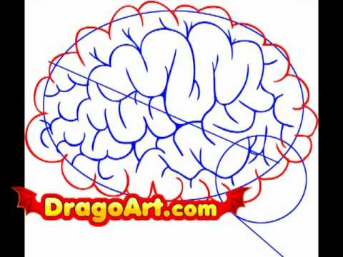 How to draw a brain, step by step - YouTube