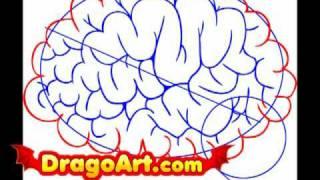 How To Draw Brain Anatomy