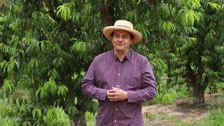 Fruit Growers Gains with AEA Regenerative Agriculture Systems