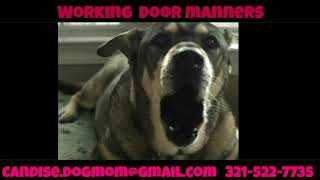 New Orleans Dog Trainer | Obedience Training | Rescue Pup Trainer
