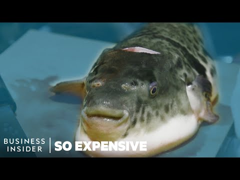 Why Puffer Fish Is So Expensive | So Expensive