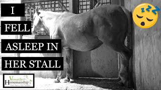 I Fell Asleep In The Foaling Stall // Versatile Horsemanship