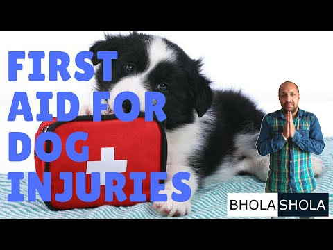 Pet Care - First Aid for Dog Injuries - Bhola Shola