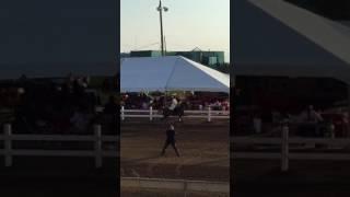 Dayton Horse Show 2017 Three-Gaited Country Pleasure Adult