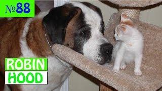 ПРИКОЛЫ 2017 с животными. Смешные Коты, Собаки, Попугаи // Funny Dogs Cats Compilation. Апрель №88