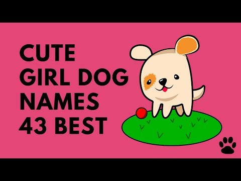 Cute Girl Dog Names - 43 BEST NAMES You Will LOVE! | Names