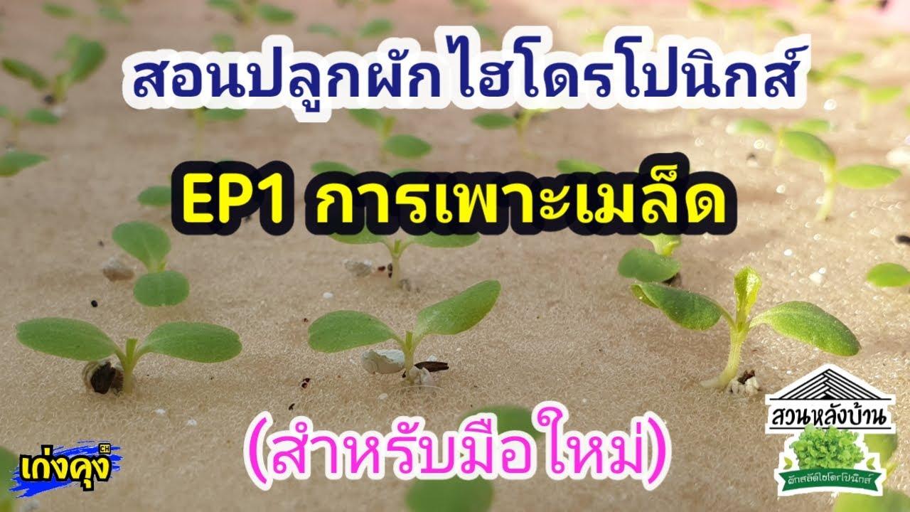 สอนปลูกผักไฮโดรโปนิกส์ (สำหรับมือใหม่) | EP1การเพาะเมล็ด | สวนหลังบ้าน  by เก่งคุง Channel