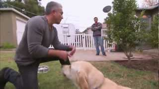 Video Un labrador muerde al encantador de perros Cesar Millán download MP3, 3GP, MP4, WEBM, AVI, FLV Juni 2018