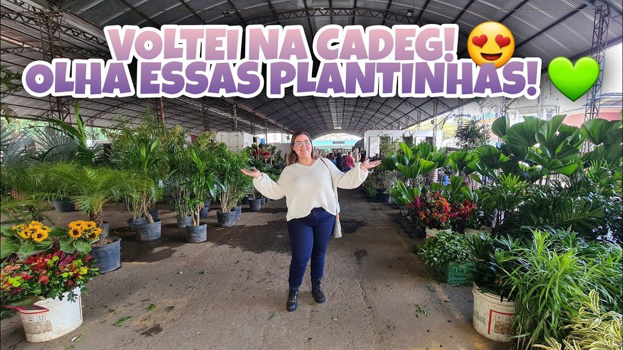 TOUR NA CADEG RJ   ACHADINHOS DE PLANTINHAS, FLORES E MAIS   Lu Ferrari