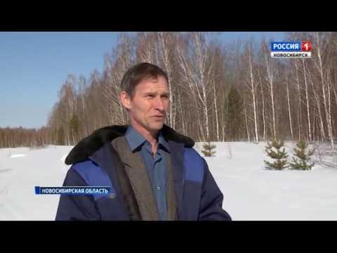 Ближе к природе: новосибирцы сбежали из города и создали своё экопоселение в глубинке