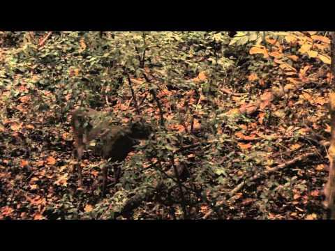 Blitz TV - Husband And Wife Deer Hunt