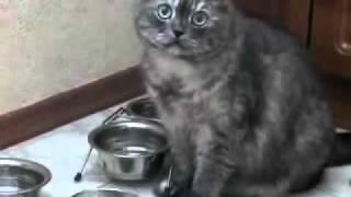 Кошка с миской