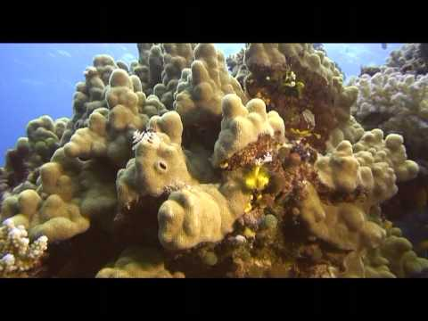 Abu galawa mer rouge