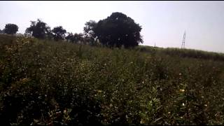 Farm Land of India, Kareli, Madhya pradesh India