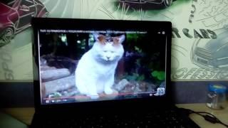 Приколы с котами моя кошка в экране
