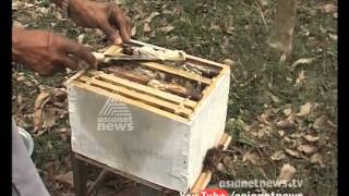 Honey Farming: Idukki Udumbannoor villagers  Apiculture farming | Money Time 5th march 2015 |
