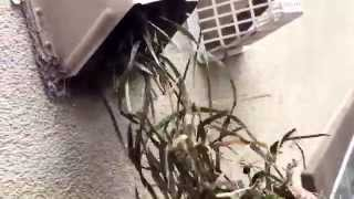 Dryer Vent Cleaning -  Montgomery County - MD By Giross Hydro Green Clean