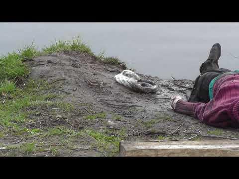 В парке Степанова найдено тело утонувшей женщины