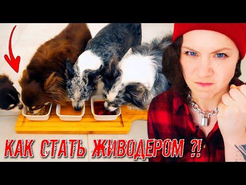 Пробую 0ТРАВИТЬ своих Собак и Кошку! Опасный Эксперимент с Питомцами и Едой
