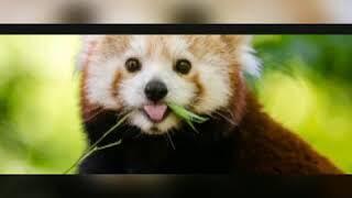 A little video of cute animals
