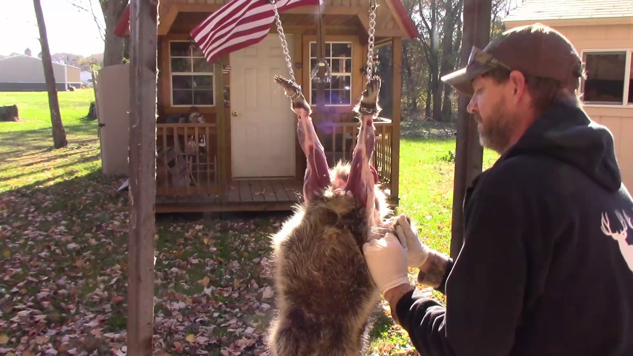 How to Skin a Raccoon