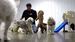 Facebook post, false accusations damage reputation of doggie daycare in Syracuse