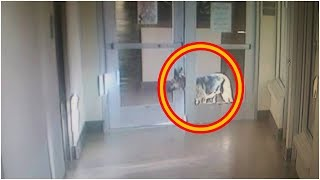 This Shelter Dog Was So Desperate To See Her Old Family . She Pulled Off The Greatest Escape