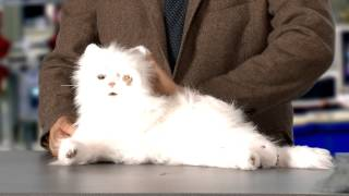 Guys Can Be Cat Ladies Too by Michael Showalter (Episode 1)