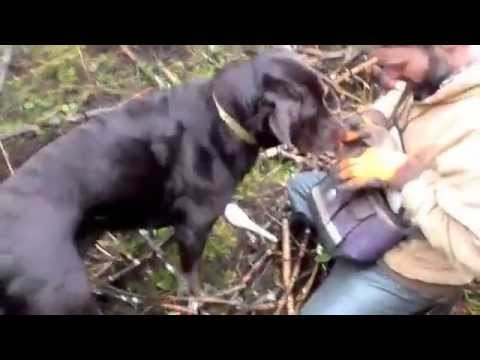 Buster Finding Oregon White Truffles