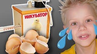 Что вылупилось из яйца? Эксперимент не удался? Что-то пошло не так!