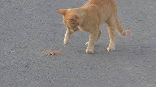 Dev Örümcek Kedi İle Karşılaşırsa