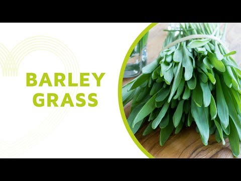 Barley Grass Health Benefits: Everything You Should Know About this Superfood