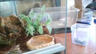 Terrarium dla Hadesa gotowe :) rośliny wreszcie przyszły
