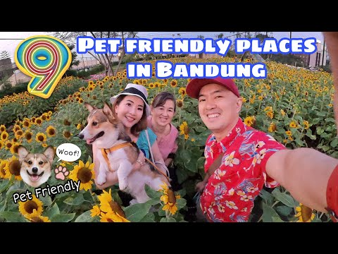 9-pet-friendly-places-in-bandung