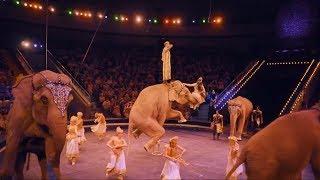 «Цирк Слонов» приглашает шымкентцев на фееричное шоу