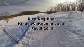 KinugawaKogen Sled Dog Race 2015 2015年2月8日「きぬがわ高原CC第10回...