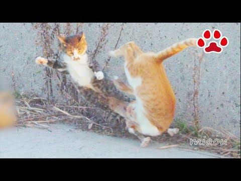2018 11 3 野良猫達【瀬戸の野良日記】 Stray cat and kitten