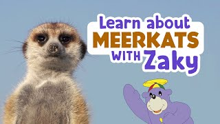 Learn About Meerkats & Sing With Zaky!