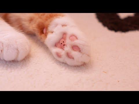 고양이들 몰래 발바닥 털을 잘라보았다!
