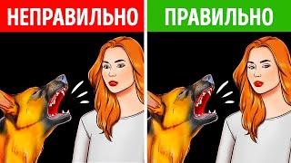 Чего не стоит делать при встрече с бродячей собакой