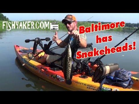 Baltimore, Maryland Snakehead Kayak Fishing!
