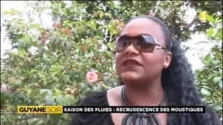 Saison des pluies, le retour des moustiques - Guyane 1ère