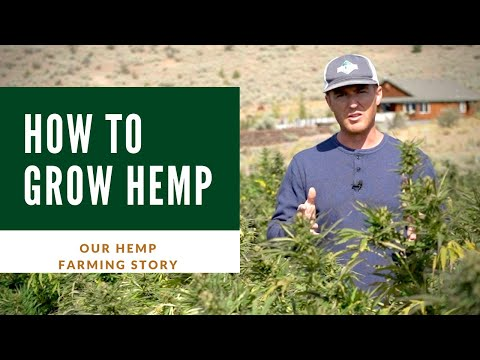 How to grow #Hemp - Our successful Industrial Hemp Farming for CBD oil
