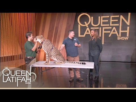 Queen Gets WILD With Animal Expert David Mizejewski | The Queen Latifah Show