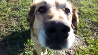 Dog sniffing camera✔