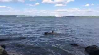 Обучить собаку плавать